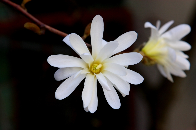 flower-2009.jpg