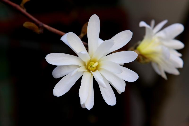 flower-2009.jpg